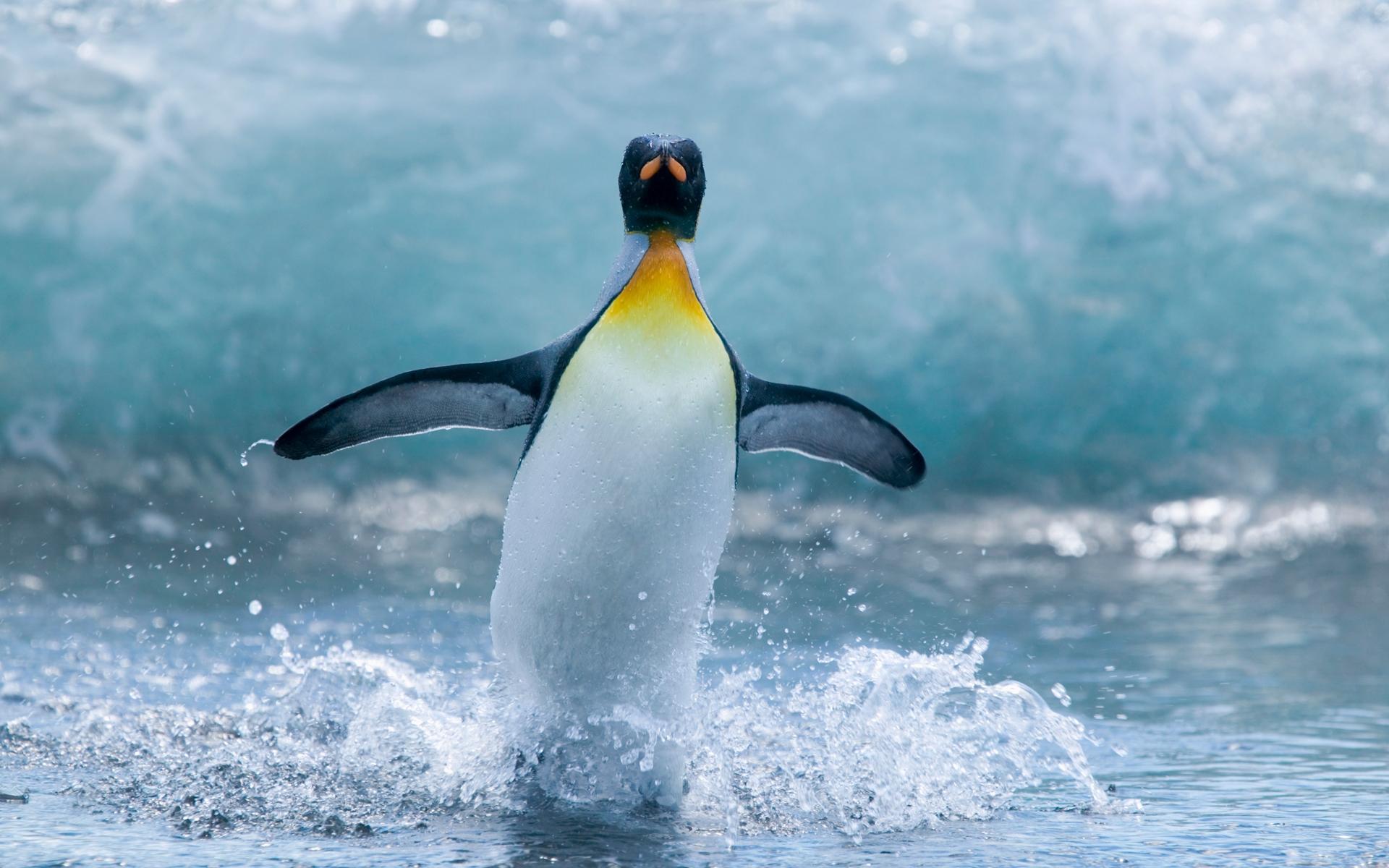 Пингвин в воде  № 96420 бесплатно