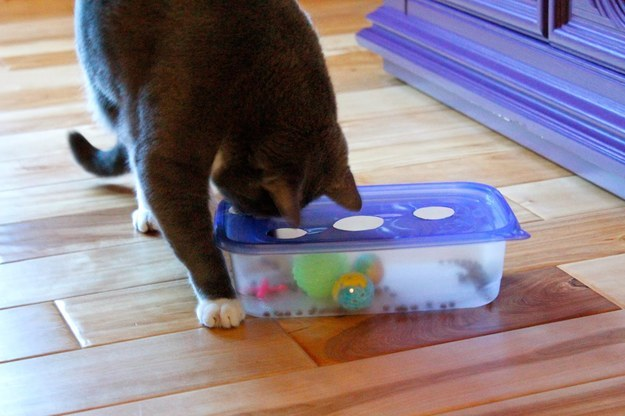 Как сделать игрушку кошку в домашних условиях