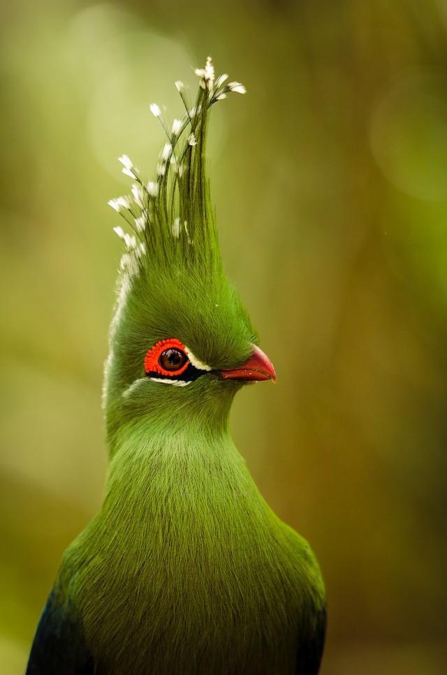 птицы редкие фото