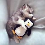 Спящие животные и их игрушки