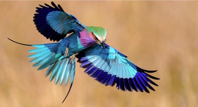 http://flytothesky.ru/wp-content/uploads/2014/09/233-640x347.jpg
