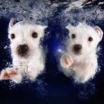Как щенки учились плавать