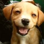 Главное правило жизни одной собаки: счастье в мелочах