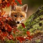 Животные, которые наслаждаются магией осени