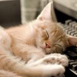 14 научно обоснованных советов для более качественного сна