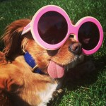 Зачем собаке язык?
