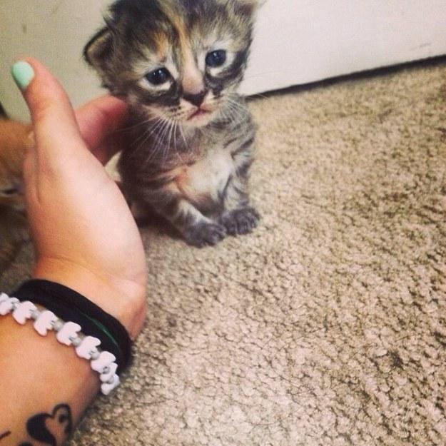 Кот на сердце