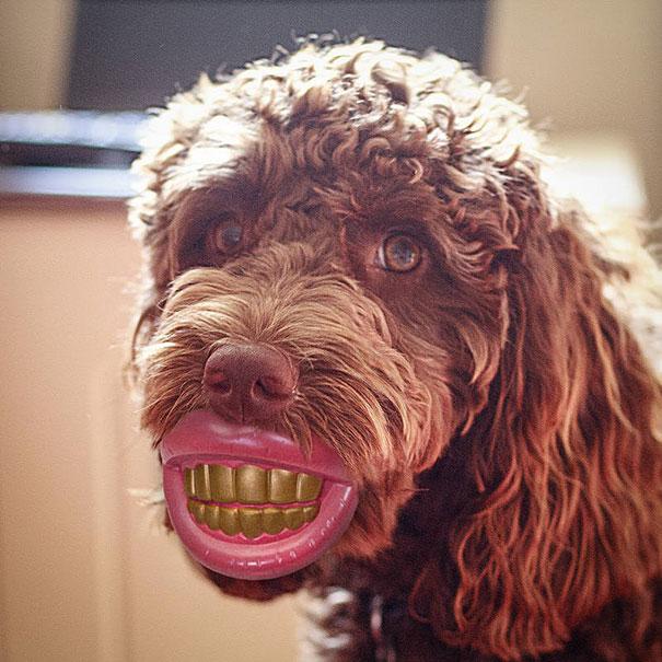 самые смешные фотографии собак