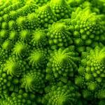 15 растений для тех, кто любит симметрию