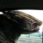Собаки, которые любят прокатиться с ветерком