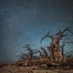 Алмазные ночи Бет Мун — древние деревья в сиянии звезд