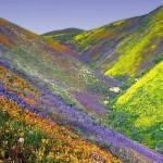 7 невероятно красивых ежегодно цветущих долин