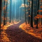 Красота осени, от которой захватывает дух