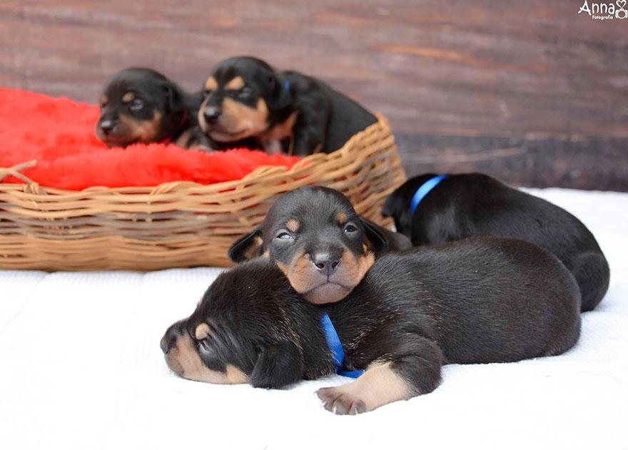 можете купить как фотографировать щенков для продажи традиционно