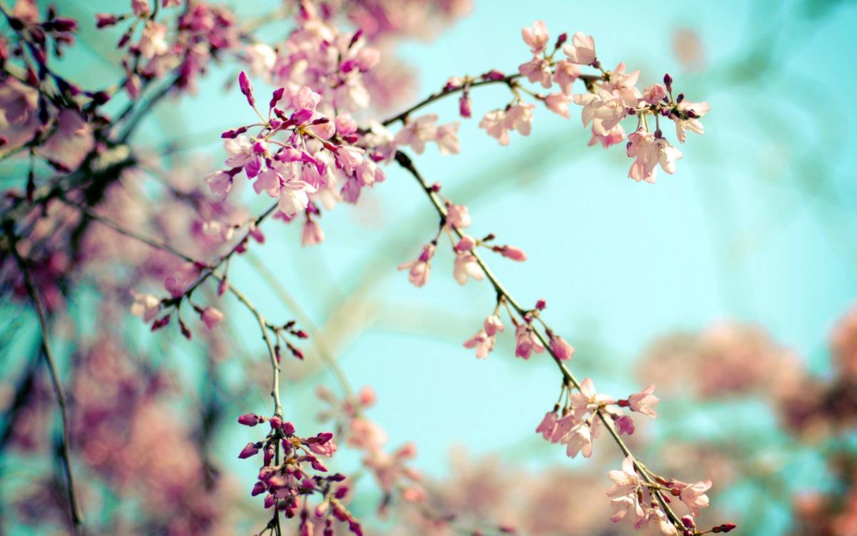 Весна природа