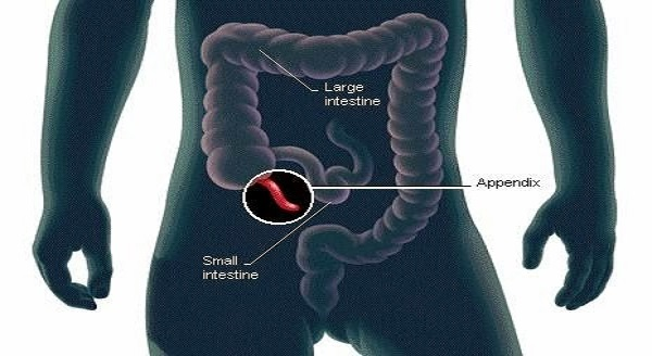 scientists-have-finally-discover-the-function-of-the-human-appendix