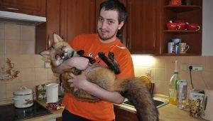 Парень спас маленькую лису, купив ее на меховой фабрике