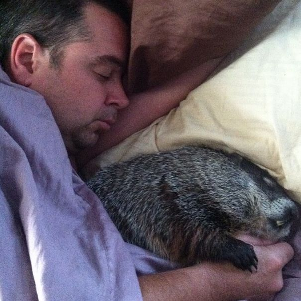 Юбилей, смешные картинки сурки спят