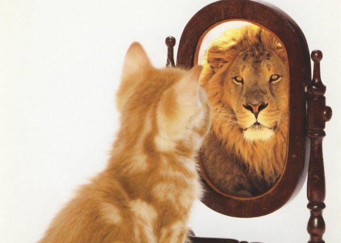 Картинки по запросу самооценка