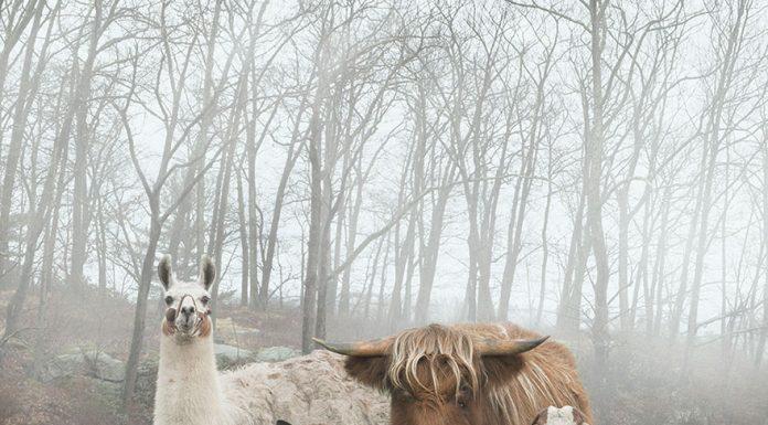 Этот фотограф делает фотосессии для животных, будто они известные рок-звезды