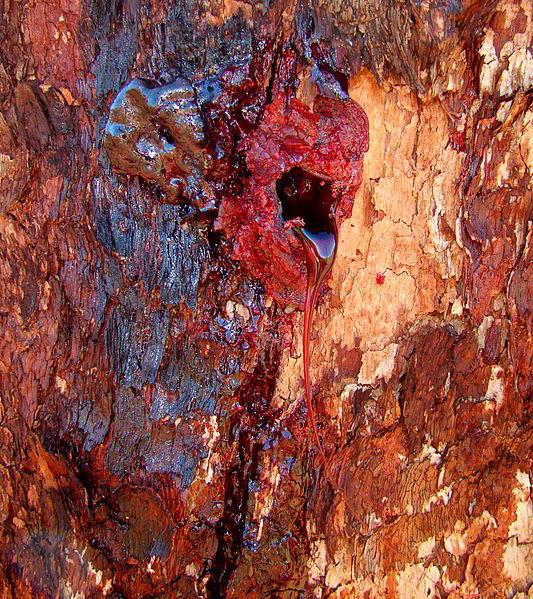 Видели когда-нибудь загадочное кровоточащее дерево? Вот оно!