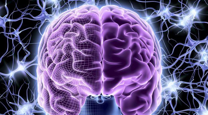 Удивительные и малоизученные функции мозжечка