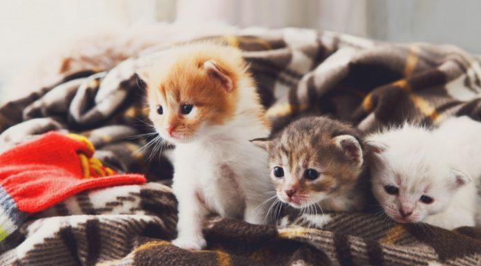Что у кошек на уме: 10 фактов