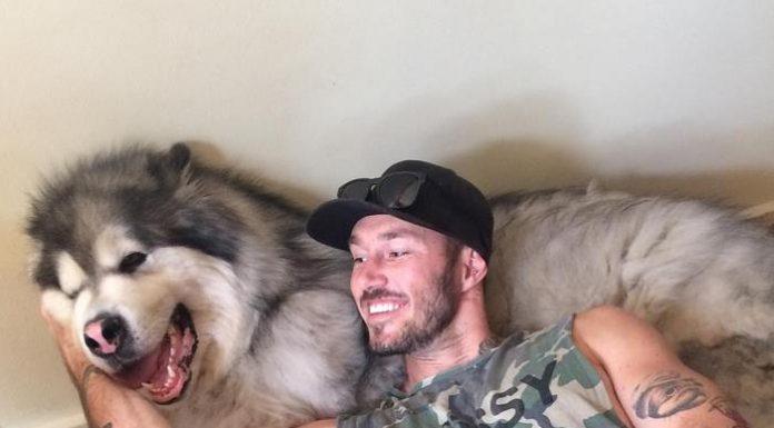 Этот парень ежедневно спасает собак. Побольше бы таких людей!