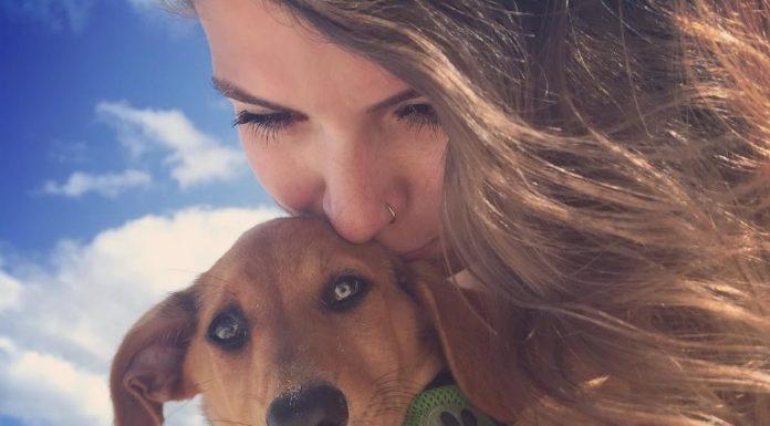 Путешествие на тропический остров, населенный собаками