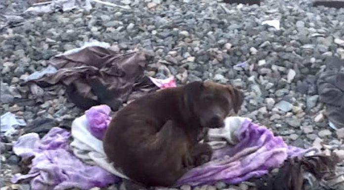 Бездомная собака просидела около своего мертвого друга две недели