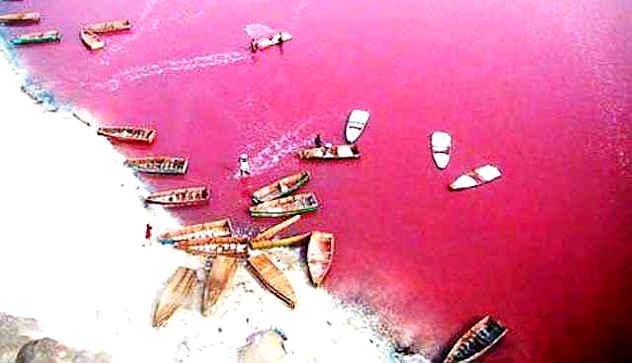 8 розовых чудес нашей планеты