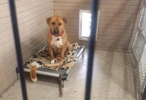 Никто не хочет усыновить эту собаку, и персонал приюта не может понять причину
