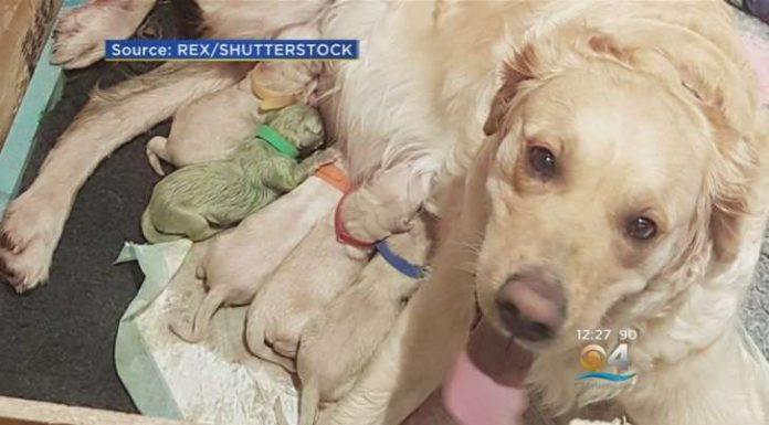 Собака родила уникального зеленого щенка, которого назвали Форест