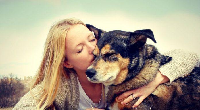 10 удивительных фактов о нашей взаимосвязи с собаками