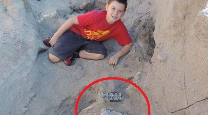 Во время пешего похода мальчик упал и обнаружил ископаемое возрастом более миллиона лет