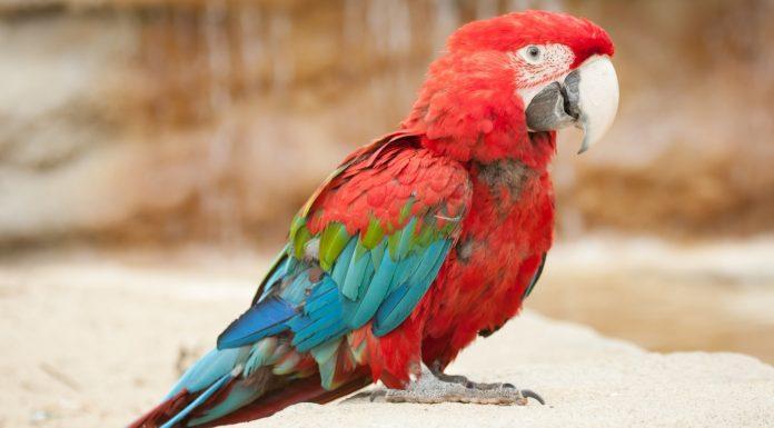 «Предупреждаю! Не разговаривайте с моим попугаем!»