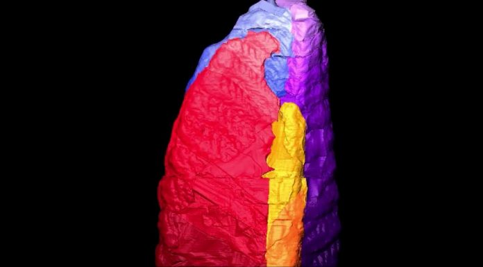 Ученые не могут объяснить тайну существ, возраст которых 580 миллионов лет