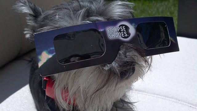 Это приложение будет собирать информацию о необычном поведении животных во время солнечного затмения