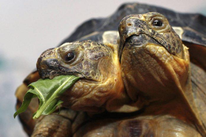 изделия, двухголовые животные фото салат