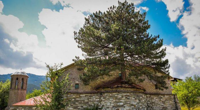 Удивительное столетнее дерево, растущее из церкви в греческом селе
