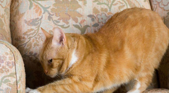 Почему коты и кошки любят царапать мебель?