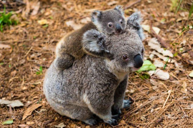 10 смертельно опасных животных, которые кажутся безобидными