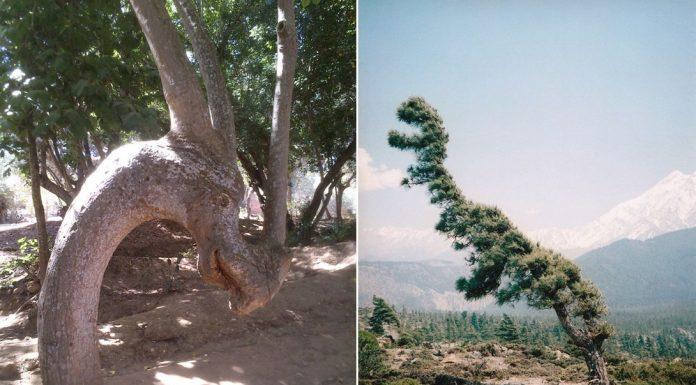 30 очень необычных деревьев