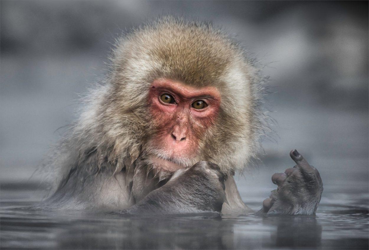 смешные картинки животных фото приколы экокожи низким