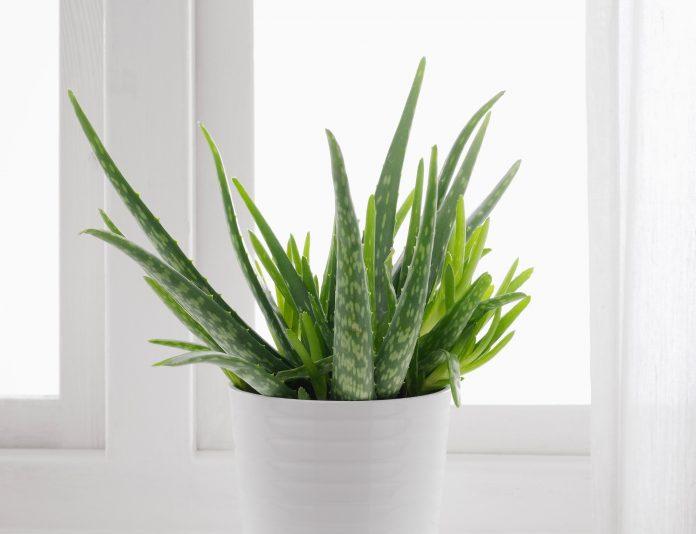 растение помогает