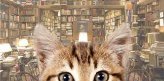 найти кота в библиотеке