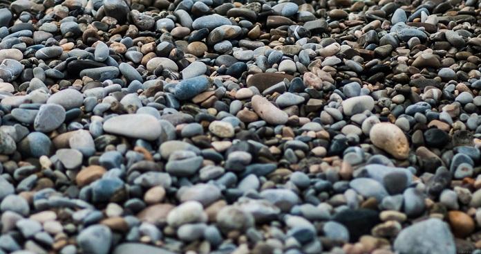 тюлень на пляже