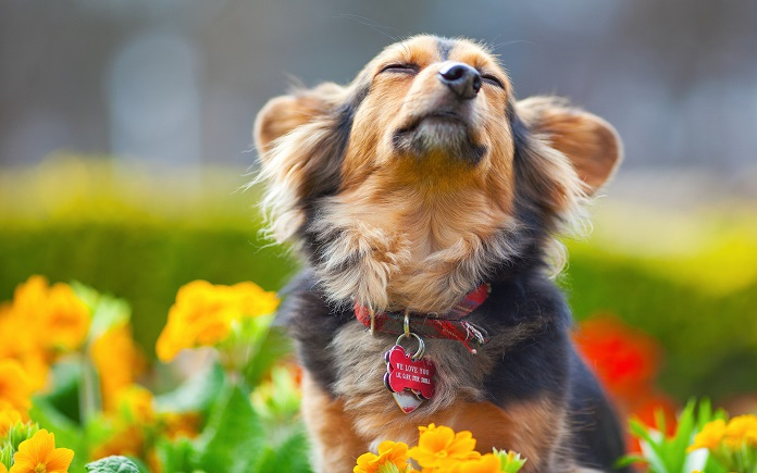 разбираетесь в породах собак