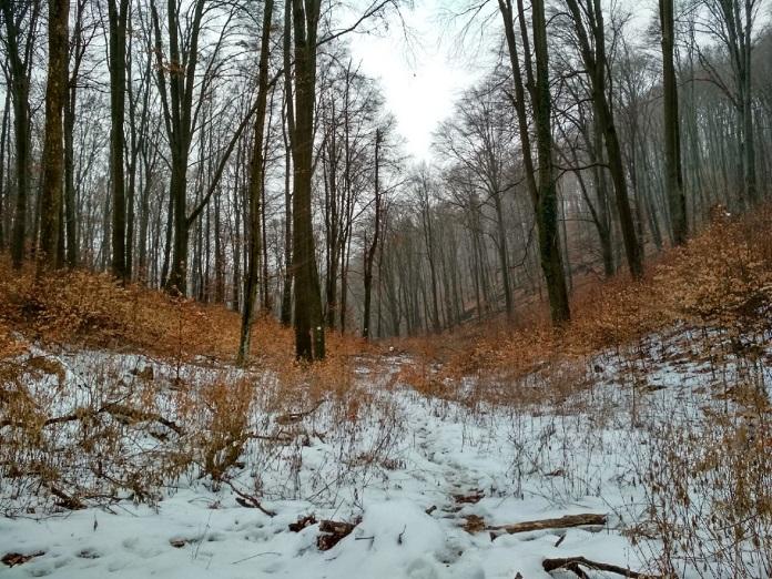 притаился в лесу