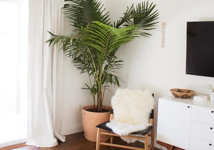 Виды комнатных пальм правила ухода в домашних условиях